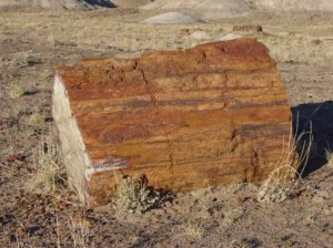 petrified wood!